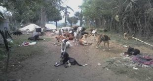 Buscan cobijo para animales de refugio en Huejutla