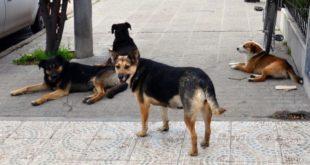 "Refugio para canes, ""gran paso"" para Tizayuca: Opat"