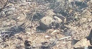 Encuentran cráneo mientras combatían incendio en Mineral del Monte