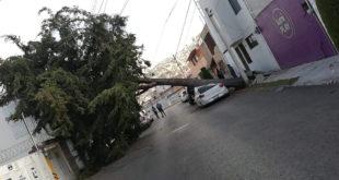 Caída de árboles, postes y espectaculares por el viento