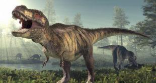 Los T-Rex enanos probablemente no existieron, dice estudio